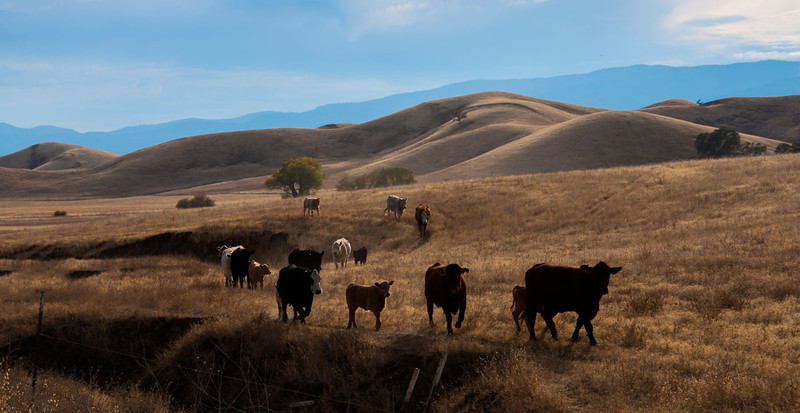 Cattle country, northern California area