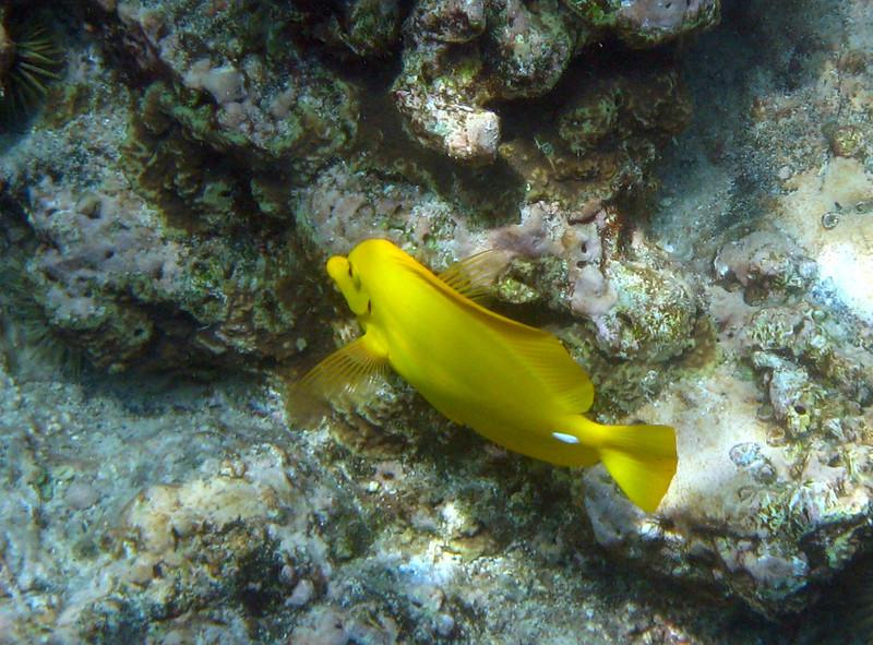 431- 20080416- Hawaii 20-Snorkelling IMG_0597.jpg