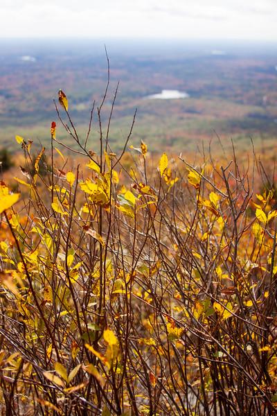yellow sticks.jpg
