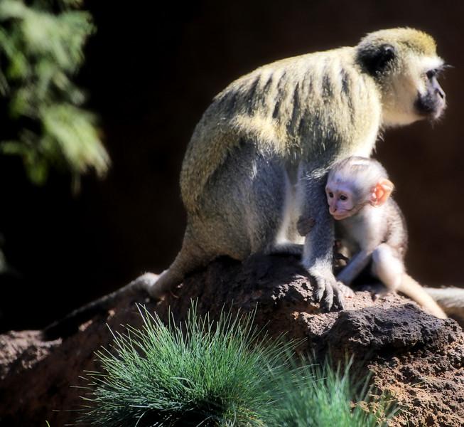 IMG_1540 Baby Monkey 2017.jpg