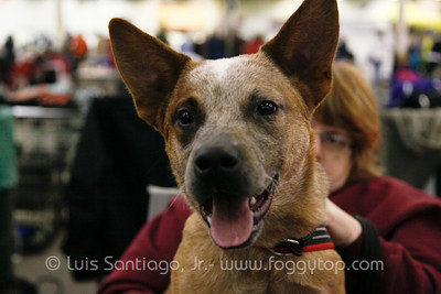 Canine Learning Experience SUN 27 Jan 2013