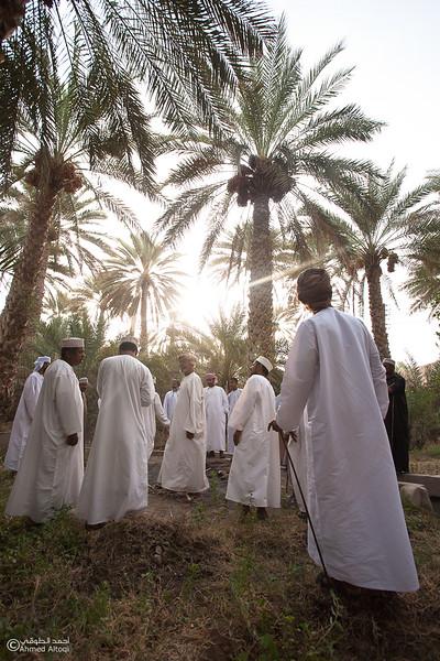 Palm Tree Auction 8- Mudhaibi.jpg