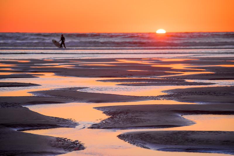 Surfing Dog Beach