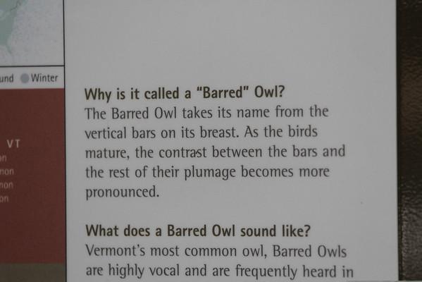 VINS Owl Festival