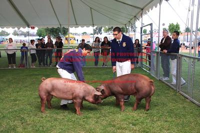 2011 LHVCF Swine