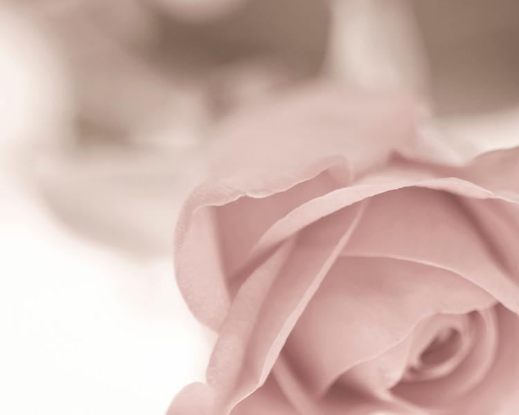 rose art.jpg