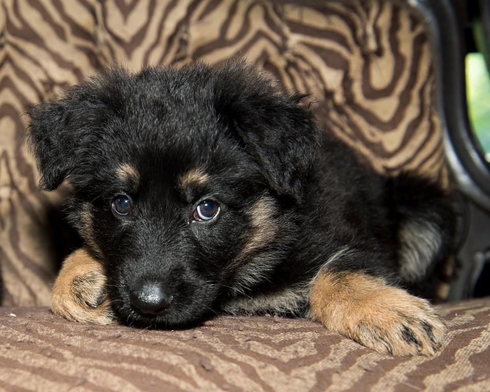 Professional Pet Portrait Photography