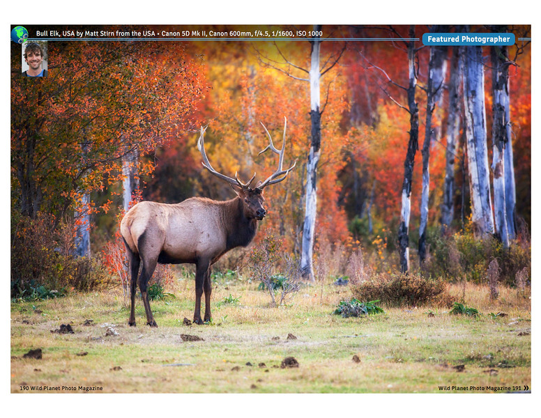 Wild Planet Photo Magazine. February 2017