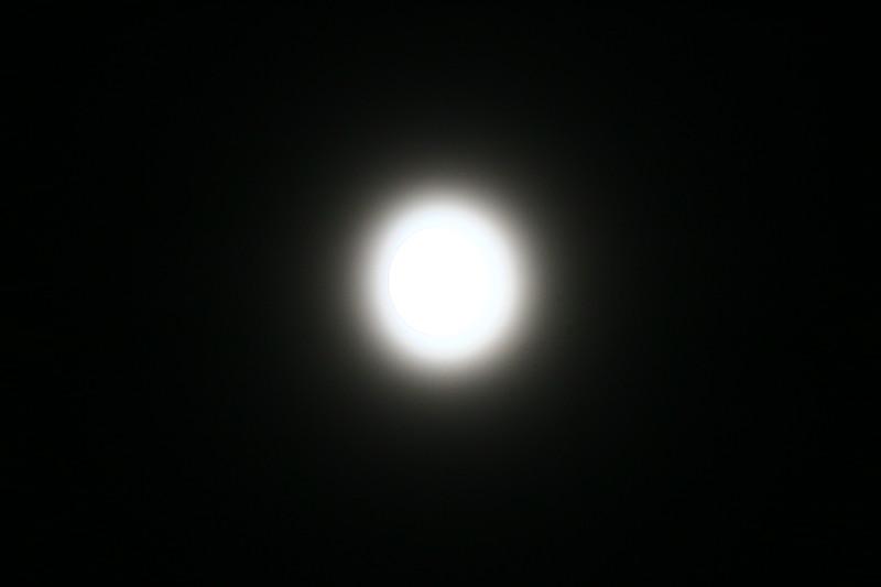 SHAY9665.JPG