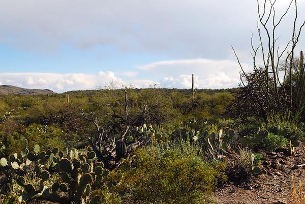 Saguaro National Park - East