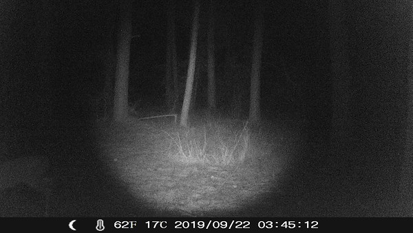 TrailCams