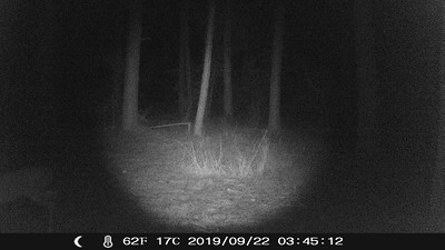 TrailCam1_092819