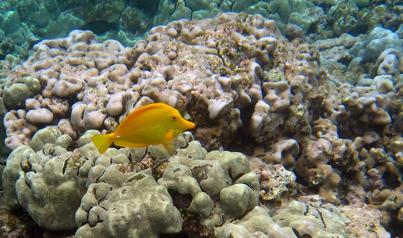 517- 20080416- Hawaii 20-Snorkelling IMG_0770.jpg