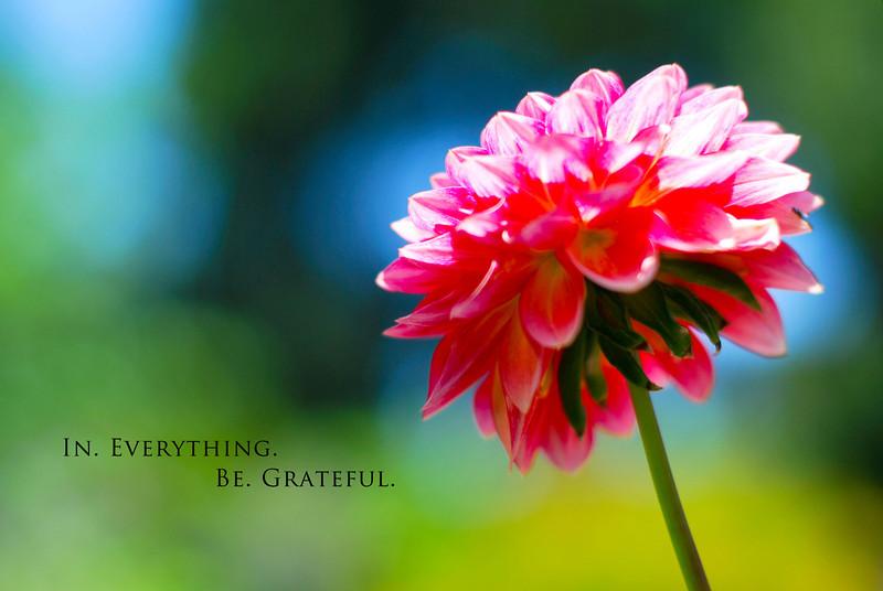6-25-12_Gratefulness-3_no-logo.jpg
