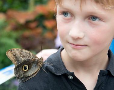 2016 Krohn Butterfly Show