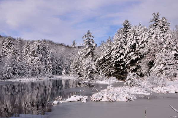 Winter  - Muskoka, Algonquin Park