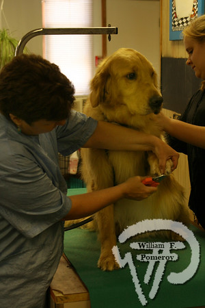 Dog Wash benefit — 2008
