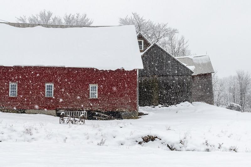Red Barn Grey Barn in Snow