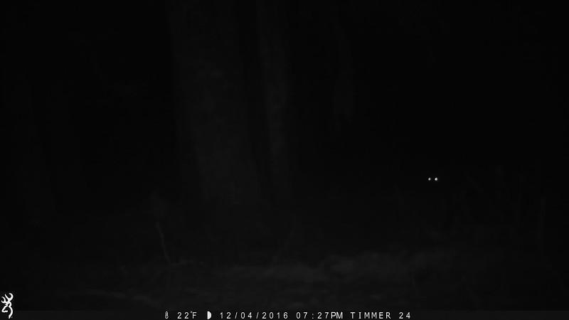 Wolves (Mt Baker area)