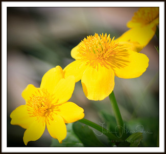 Spring & pondflower