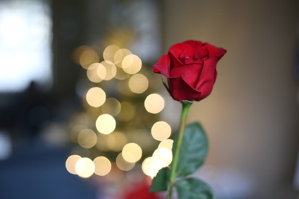 Christmas Decor 12.22.19