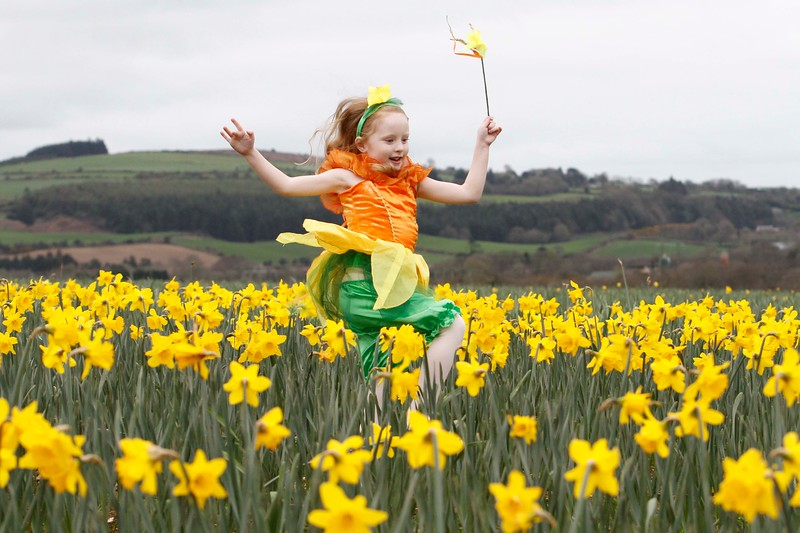 Sarah Casey from the Joan Denise Moriarty School of Dance in the Little Silver Daffodil Farm, Castle Lack Bandon to launch the Irish Cancer Society Daffodil Day Pic Darragh Kane