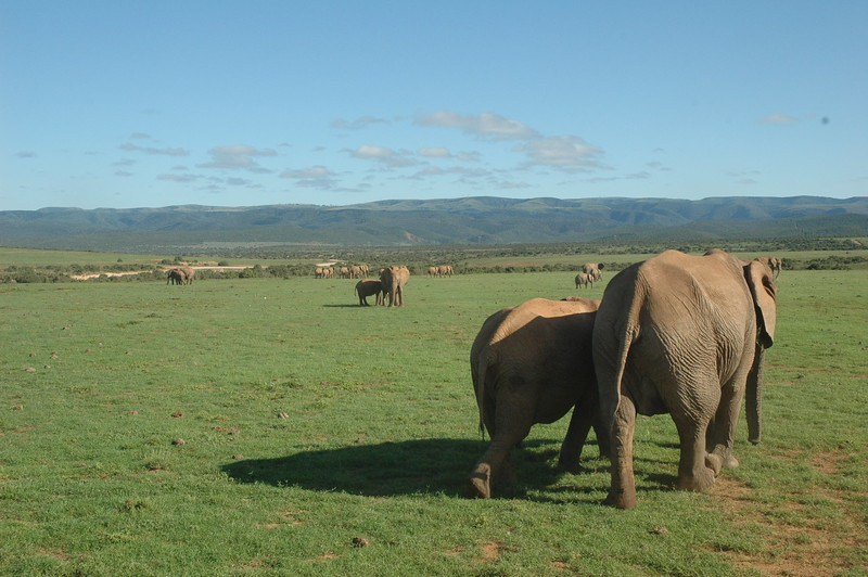 Addo Elephant National Park - Leslie Rowley