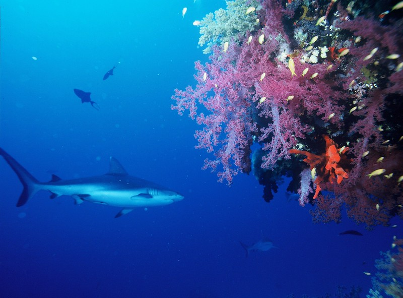 Southeast Asia adventures Scuba diving with Bull Sharks Thailand