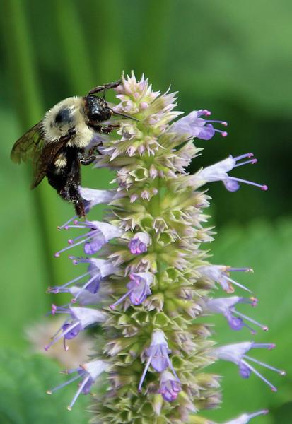 Bumble bee 41