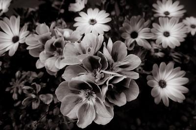 Blumenpracht Balkonien