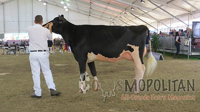 Sydney Royal Holsteins 2015