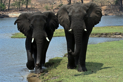 Botswana- Chobe National Park