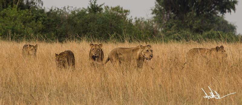 Lions Queen Elizabeth - Ssig-2.jpg