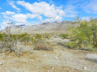 Palo Verde Canyon