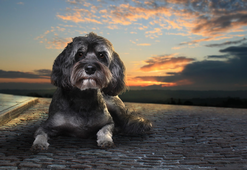 Grey-dog-3.jpg