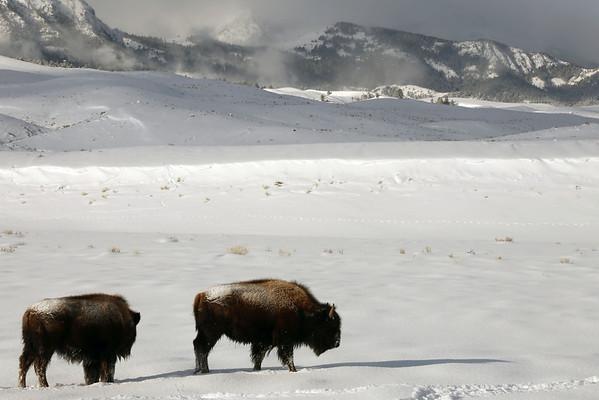 Yellowstone Winter 2014