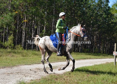 Autumn Gallop at Camp Boggy Creek