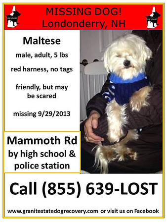 Maltese Found and Missing Again