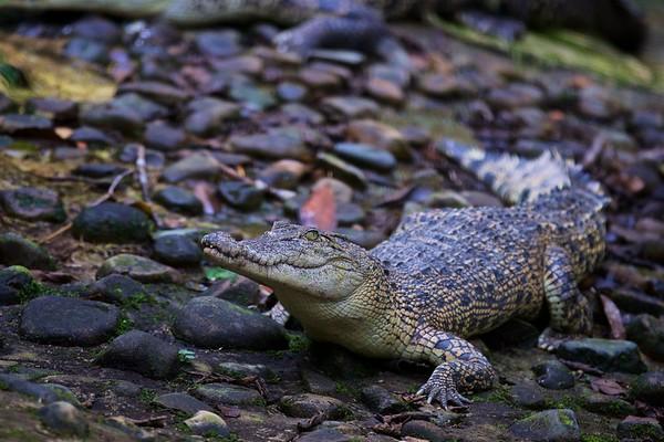 Borneo Wildlife Parks