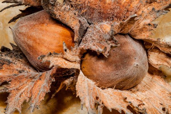 Hazelnut Macros