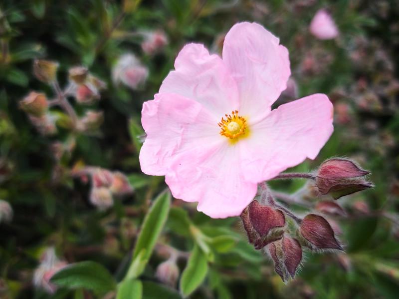 Wrinkled Flower
