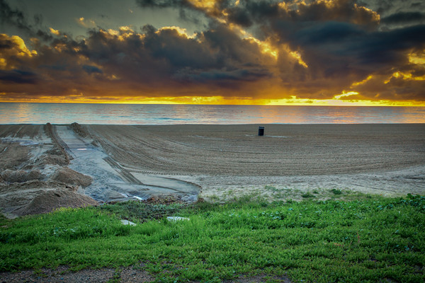 January 12 - Grass growing on the beach after a rainstorm in Los Angeles.jpg