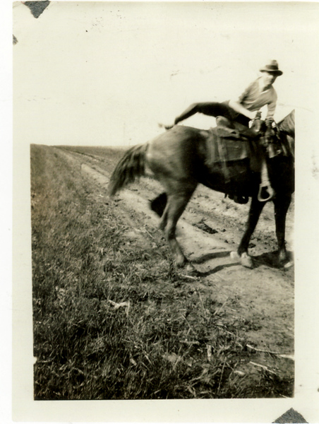 HORSE 05.jpg