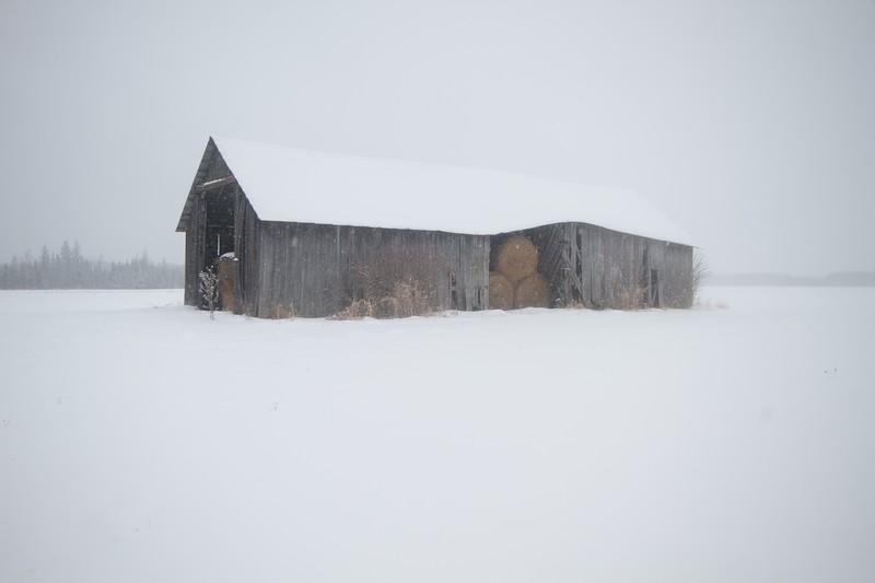 Farmstead Finnish barn Birch tree snow landscape CR5 Toivola MN Sax-Zim Bog IMG_9563.jpg