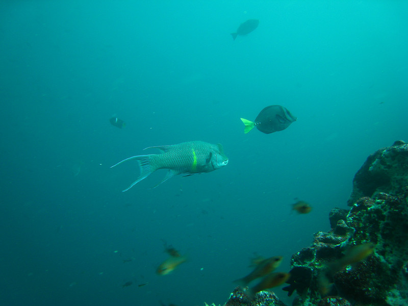 Diving in the Galapagos (278 of 392)