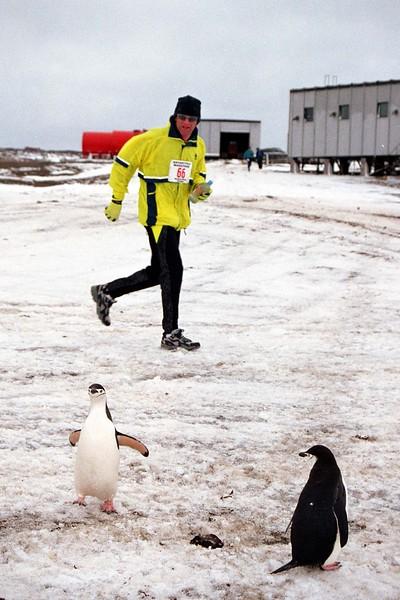 penguinswatching.jpg