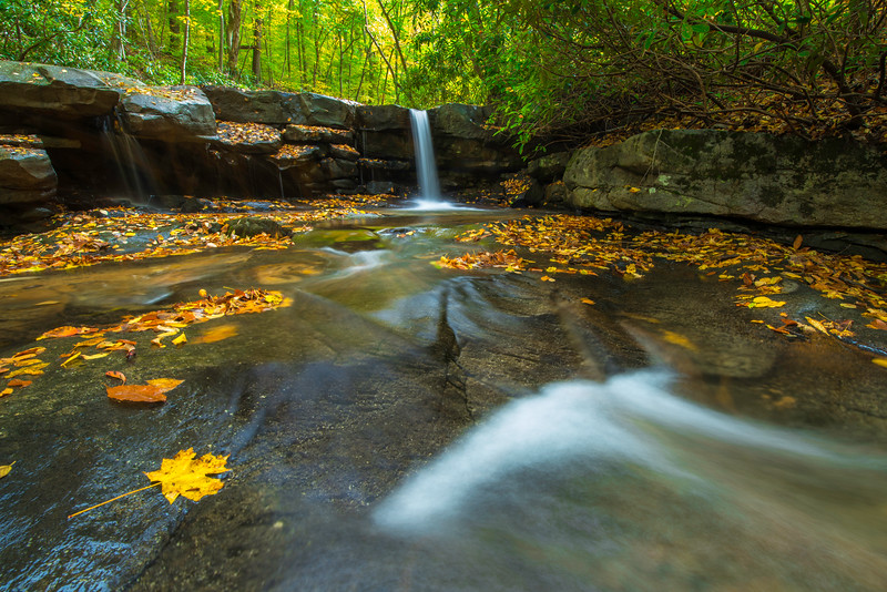 Single Leaf Double Cascade Ohiopyle Jonathan Run Autumn.jpg