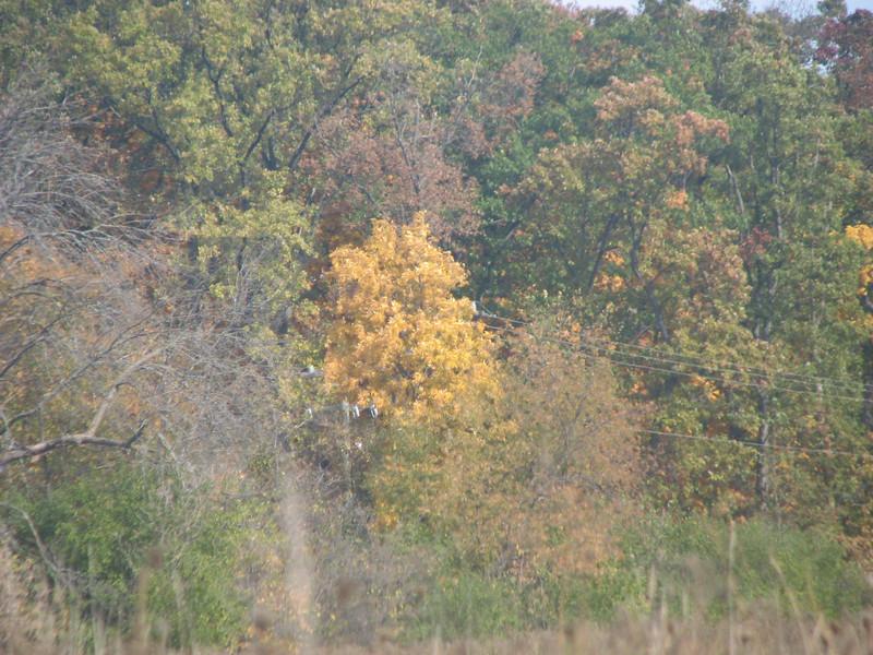 Fall pics 2008 017.jpg