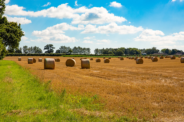 Hay & Straw Bales
