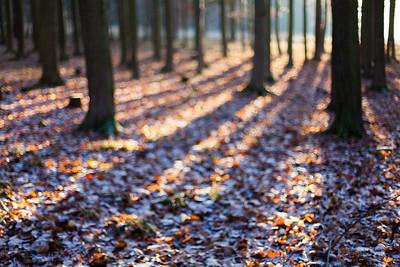 Czech Woods 2012 - ...